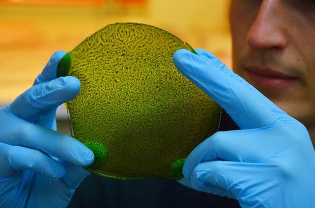 Αυτό το τεχνητό φύλλο είναι ένα εργοστάσιο οξυγόνου που θα μπορούσε να μας βοηθήσει να αποικίσουμε το φεγγάρι