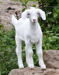 spinnersfarm.blogspot.com