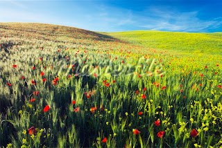 Beautiufl-Flower-Field-Landscape