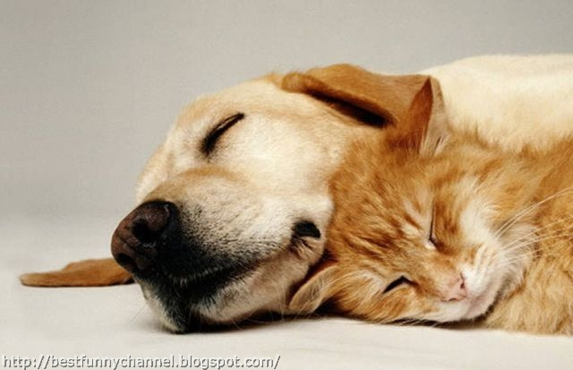 Cat and dog sleeping.