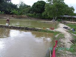 piscicultura 2011 07 03