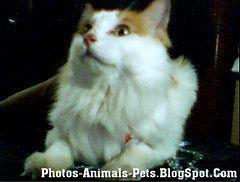 http://2.bp.blogspot.com/-G6R7cS4F_3Q/TXmfg-RDnDI/AAAAAAAAAEM/j_6iD3z7suE/s1600/Cat%2Bcute%2Bpictures%2B_0001.jpg