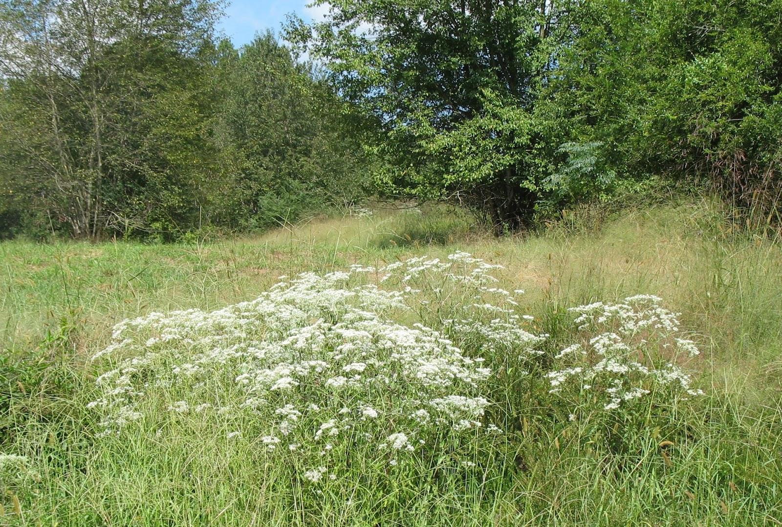 Using georgia native plants wild roadside vs average garden for Wild grass landscaping