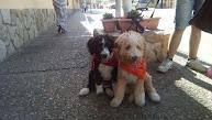 Mis perritos de agua español:Canela, Roky, Endo y Noa