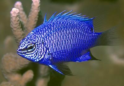 kaskus-forum.blogspot.com - 9 Spesies Hewan Baru Ditemukan di Bumi Papua