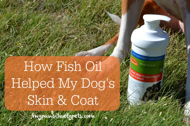 How a fish oil supplement helped my dog 39 s skin and coat for Dog food with fish oil