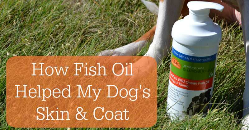 How a fish oil supplement helped my dog 39 s skin and coat for Can i give my dog fish oil