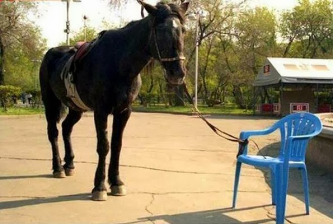 Image result for a picture of a donkey being tied up on the chair