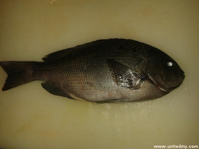 Isaki fish
