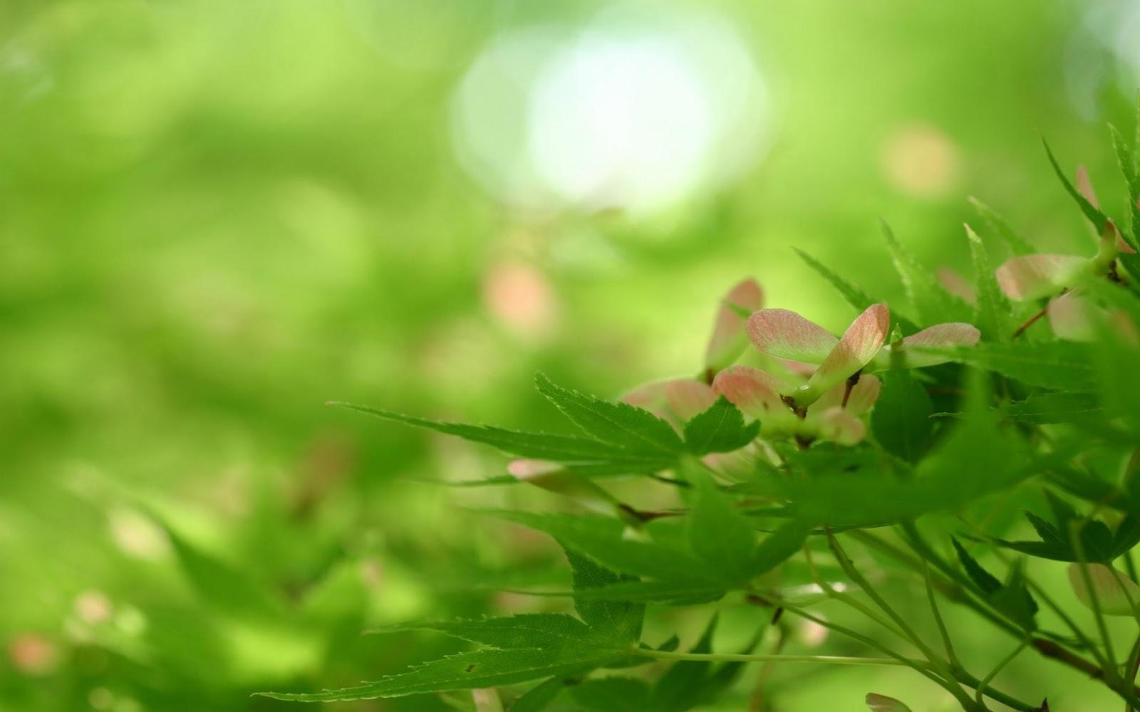 http://2.bp.blogspot.com/-G7Jd9bVFyag/UHr-A7GRJGI/AAAAAAAAFpE/QDdlTU7SAMk/s1600/rising-nature-wallpapers_8401_1680x1050.jpg