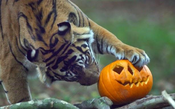 Funny halloween animals2-13