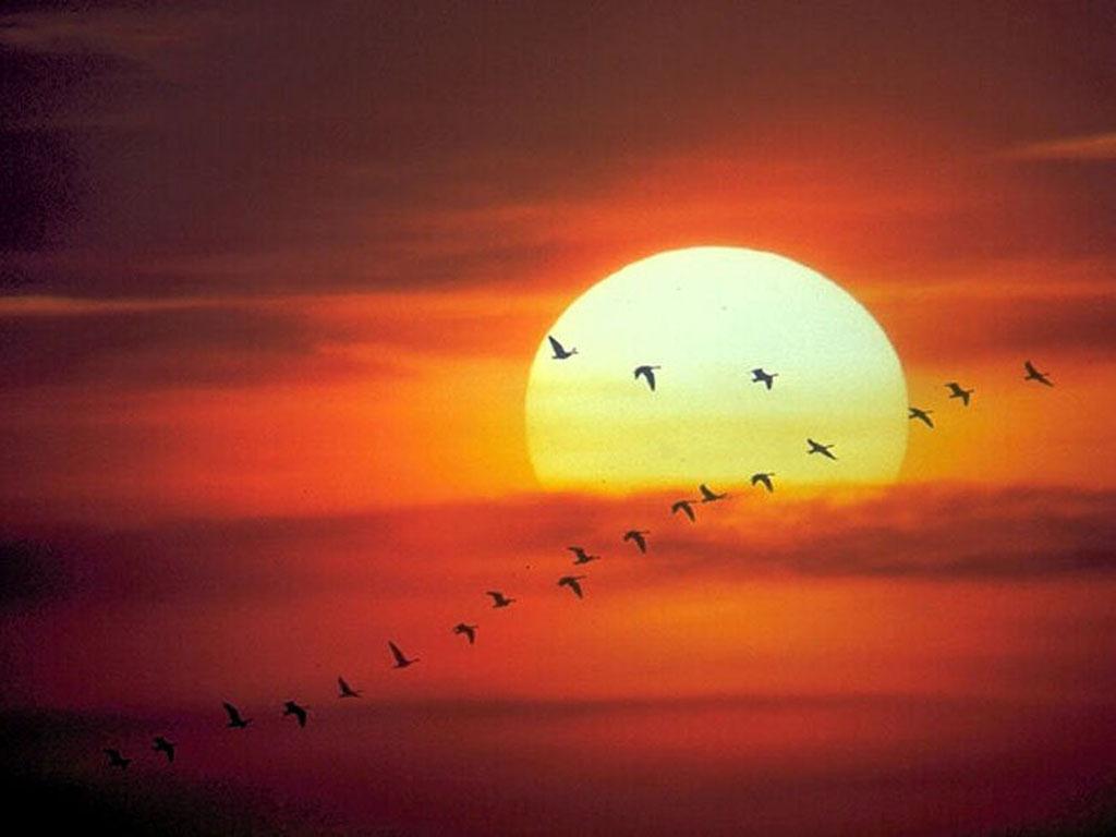 Puesta de sol | Cientos de Imagenes