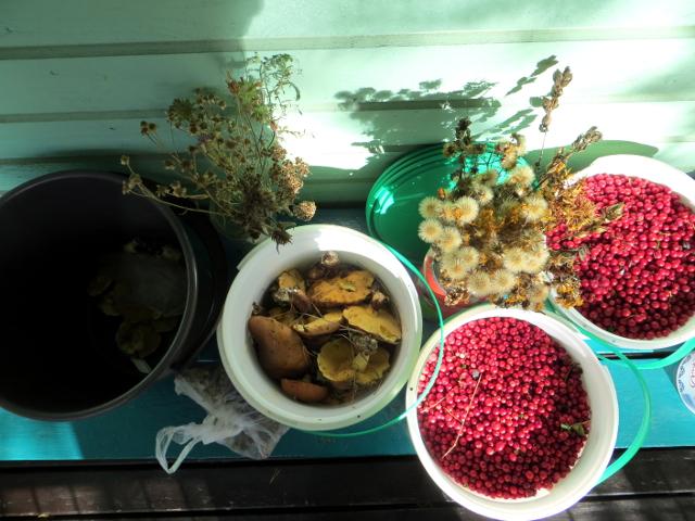 flower seeds lingonberries mushrooms