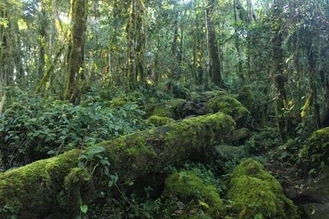 Wisata Gunung Bawakaraeng Gowa