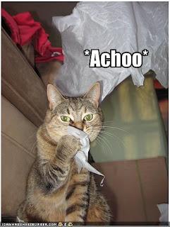 Mengatasi flu pada kucing