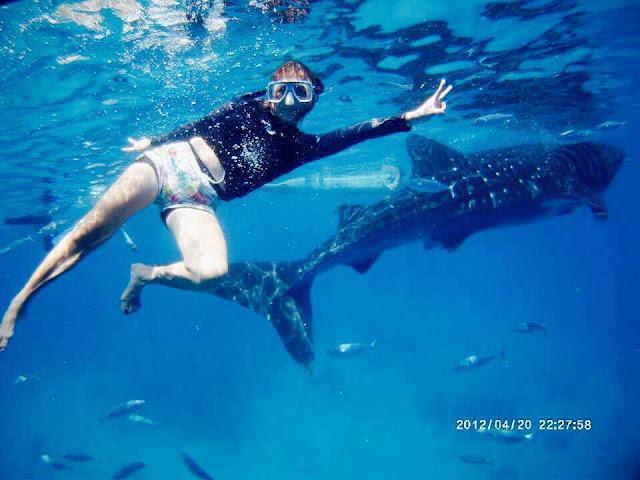 Oslob Whale Shark Watching