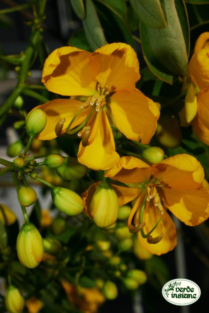Immagini di fiori autunnali for Immagini fiori autunnali