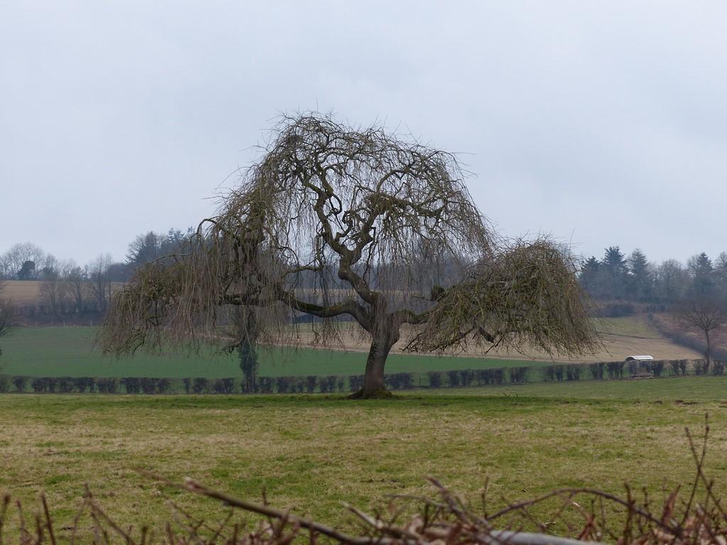 Au pied de mon arbre...