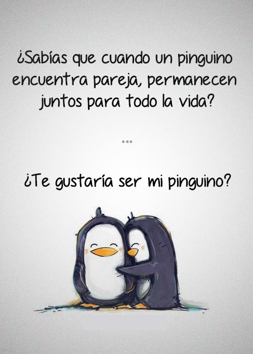 el amor de los pinguinos, pinguinos enamorados, pinguinos amor eterno, frases de pinguinos