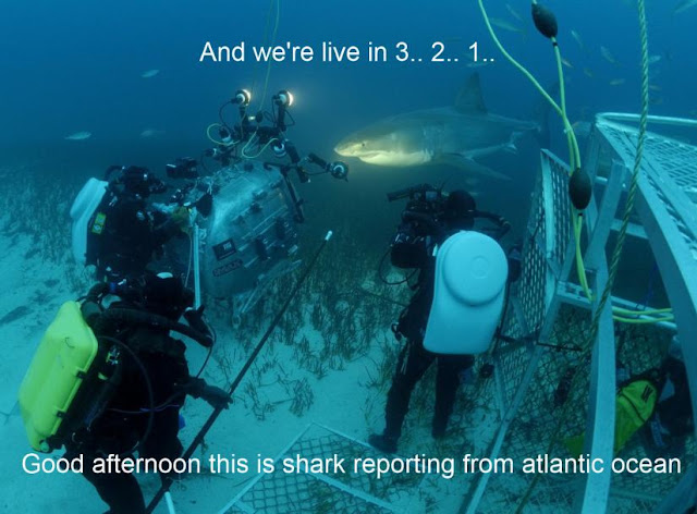 animal pictures with captions, shark live tv