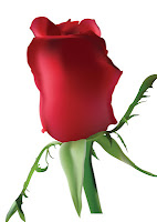 Photorealistic red vector rose.  Created by Ataei.http://www.greatvectors.com/2011/10/realistic-vector-rose/