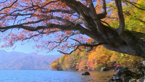 Beautiful Wide Tree River Side Pictures