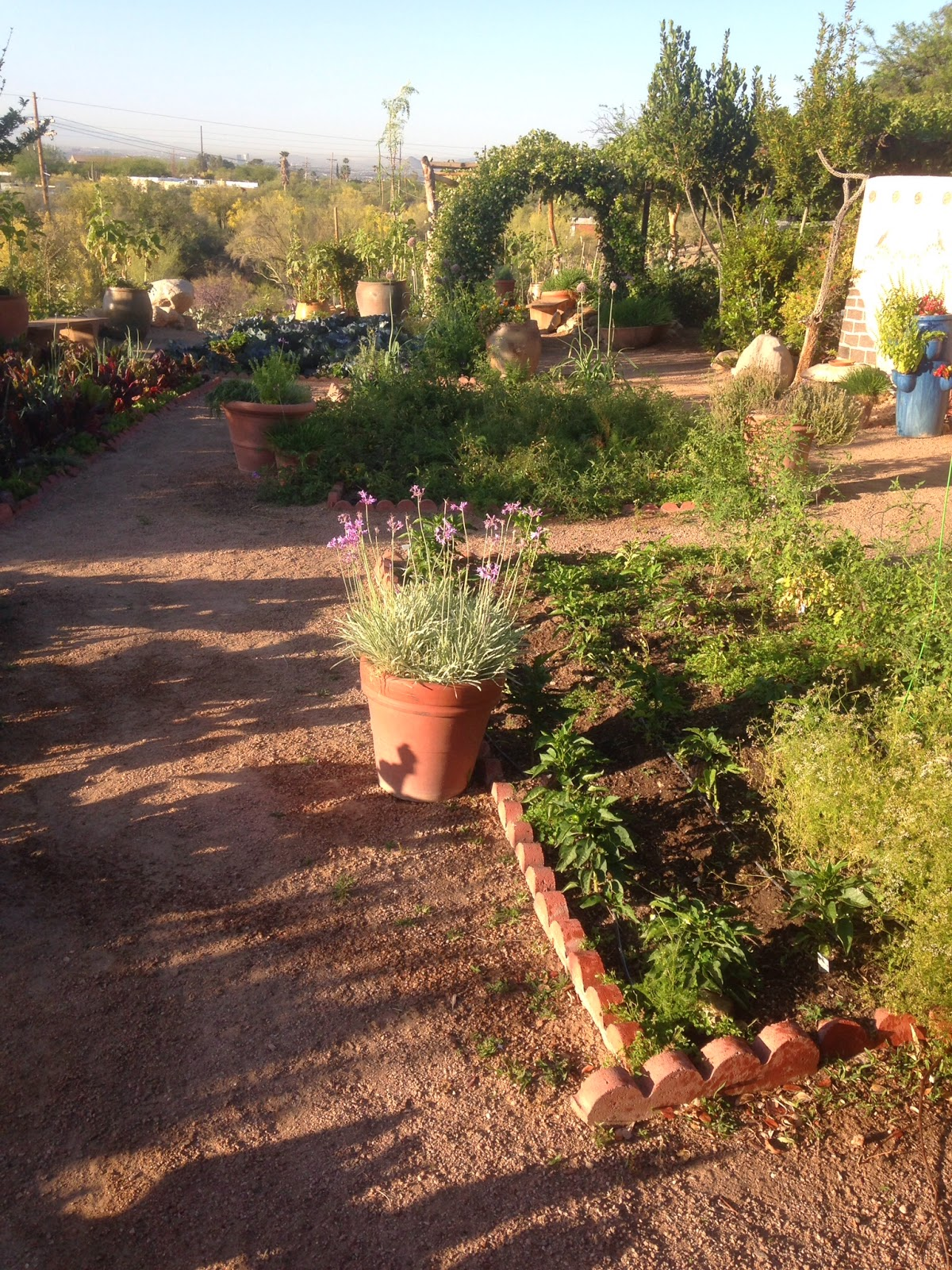 VegHeadz: Sustainable Gardening in the Desert
