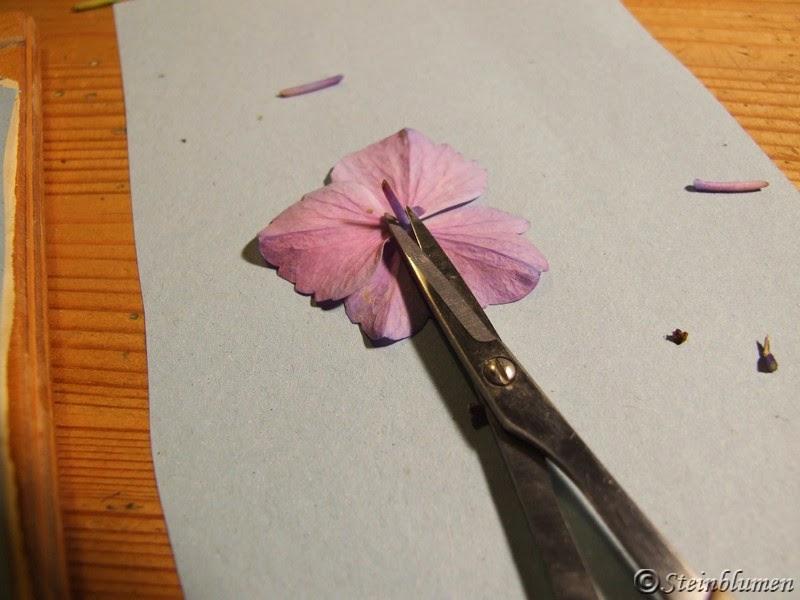 Blüten trocknen in der Blumenpresse
