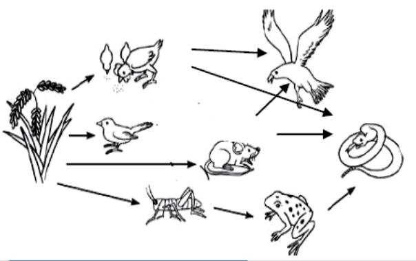 Ekosistem Persawahan