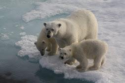 Spitsbergen 2011