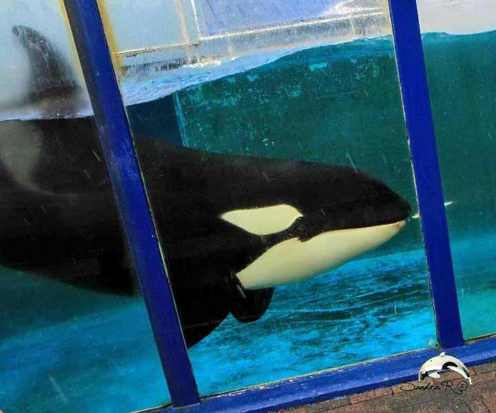 [Photos] Orques aux vitres - Page 2 Morgan+1