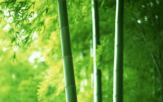 Bamboo Pictures3