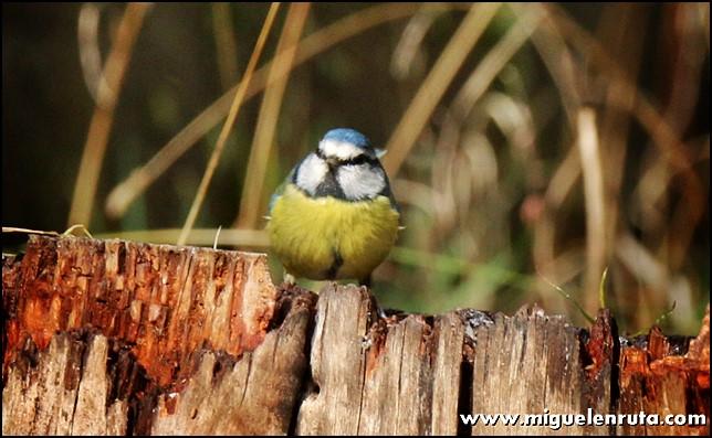 Hide-Ornitología-Hostal-Almanzor-Gredos_7