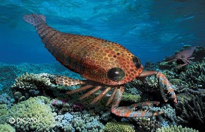 Kalajengking Laut
