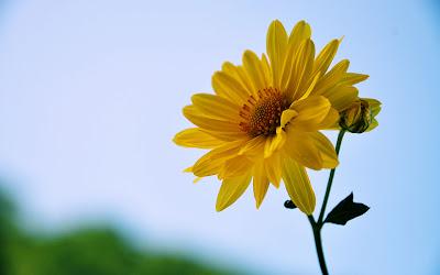 Una hermosa flor amarilla