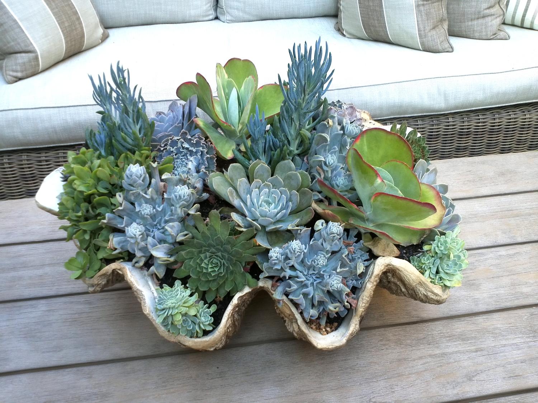 Pixelimpress rh Can succulents grow outside