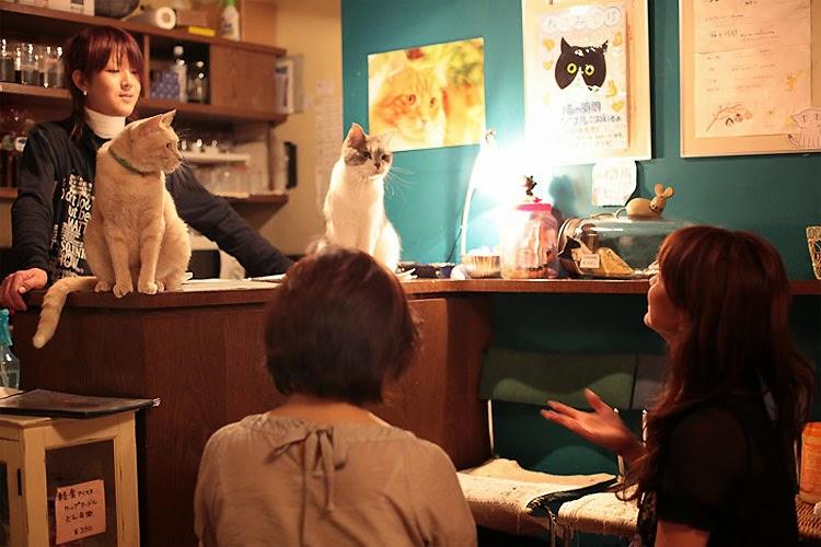 Кошачье кафе Catfé 05