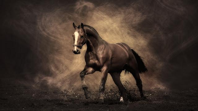 Stunning Dark Brown Horse Wallpaper