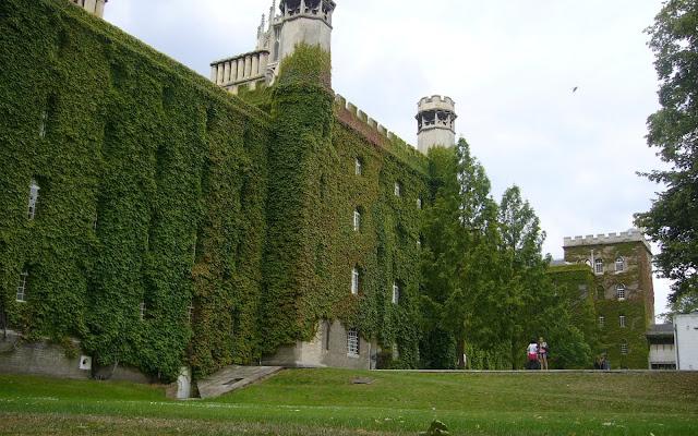 Ivy University