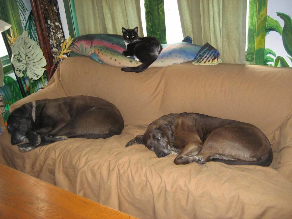 Pets N More: How to Safely Re-Home A Pet On Craigslist