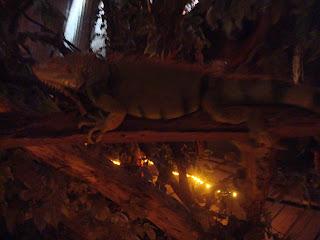stuffed lizard on the tree