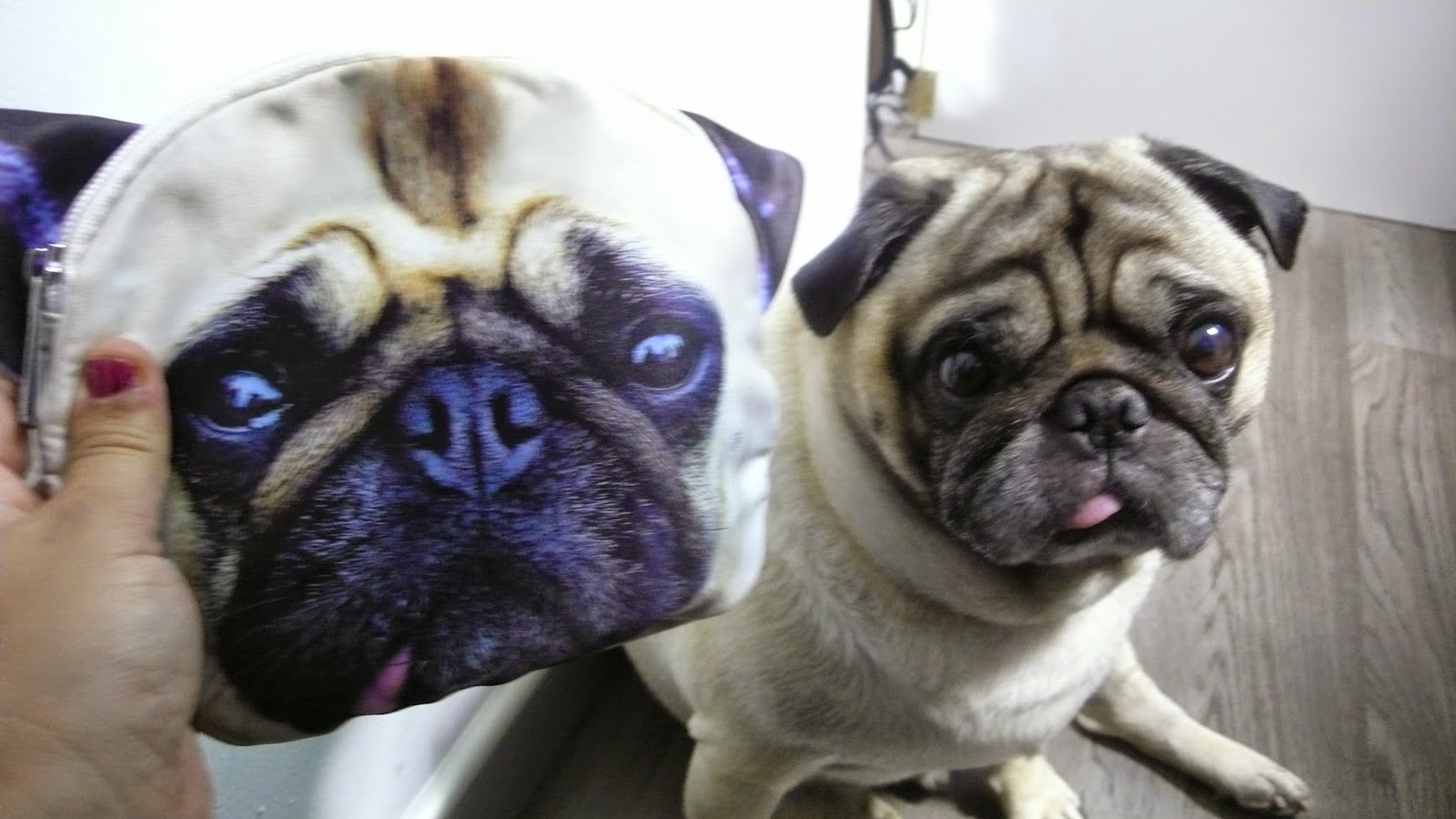http://www.choies.com/product/3d-double-sided-printing-meng-dog-pack_p16360?cid=3957jesspai