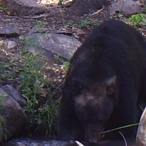 bear+2.png