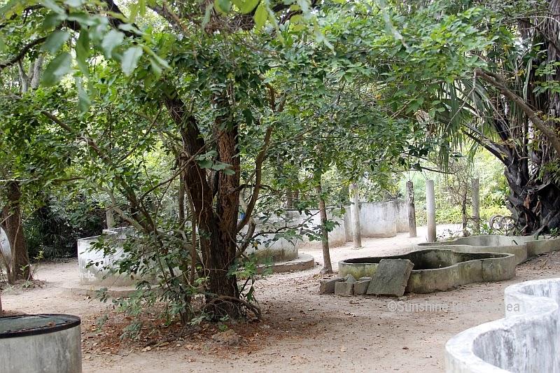 The Reptile Farm in Kartong