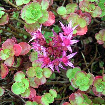 Piante e fiori piante perenni che fioriscono in estate a for Piante da bordura perenni