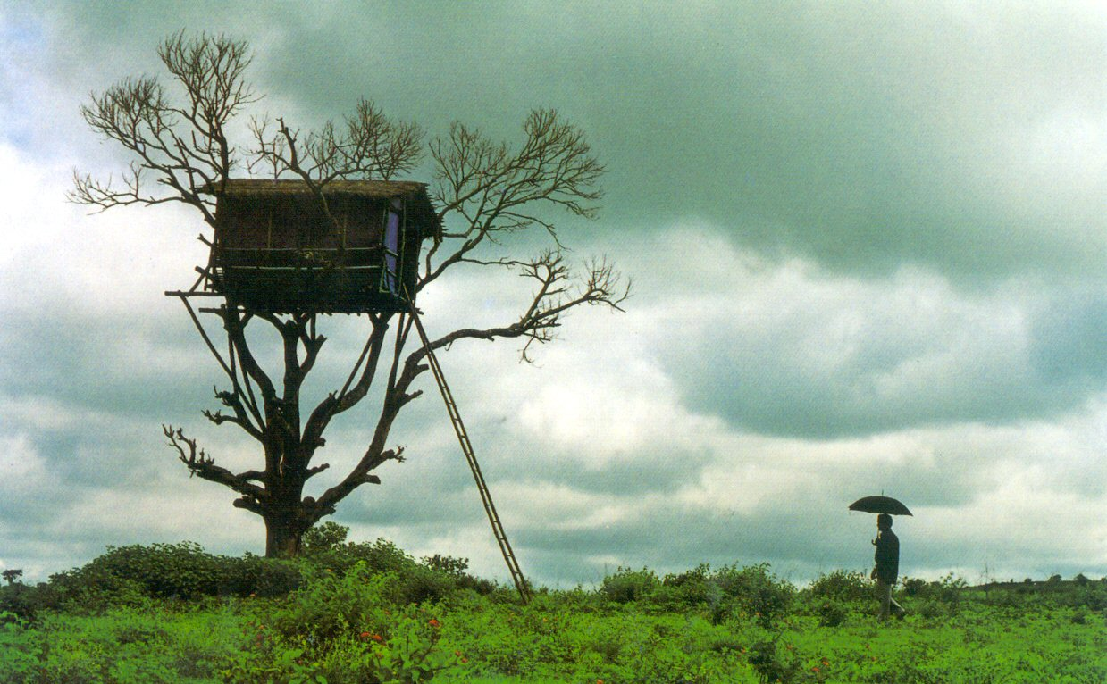 Amazing tree house wallpapers for Amazing house pictures