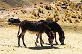 La fauna de mi Perú
