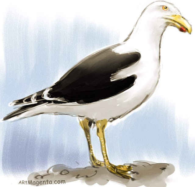 Great Blak-backed Gull is a bird sketch by artist and illustrator Artmagenta