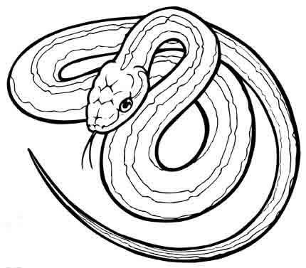 Dibujos para colorear animales vertebrados e invertebrados - Imagui