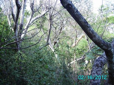 natural forest restoration